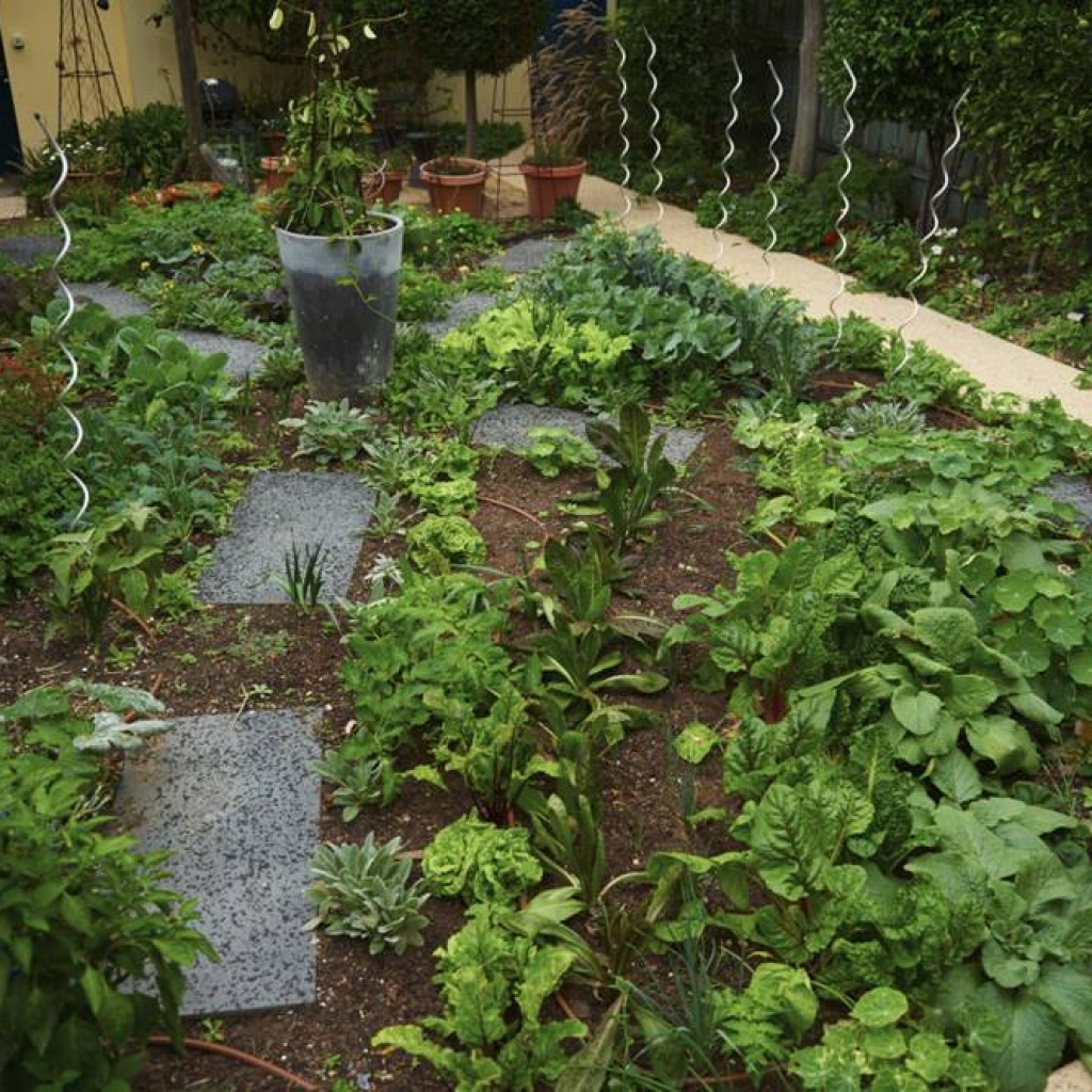 Edible Garden Design and Construction Port Melbourne Ross